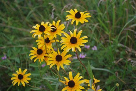 imagenes flores silvestres flores silvestres stock de foto gratis public domain