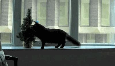 cats vs christmas trees a holiday gif collection