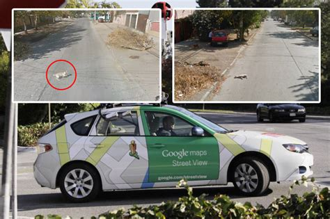 google images car google map car killed a dog notallowedto com