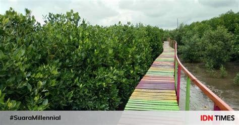 potret pesona hutan bakau  ekowisata mangrove lantebung