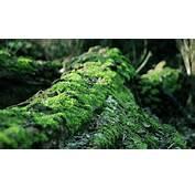 Tree Blocks Wallpaper  2560x1600 32252