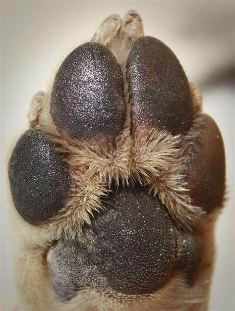 puppy paw 5 must tips for taking care of your s paws iheartdogs