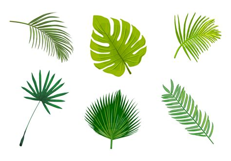 palm leaf isolated vectors download free vector art