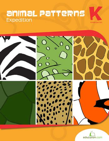 patterns in nature lesson plans kindergarten animal patterns expedition workbook education com