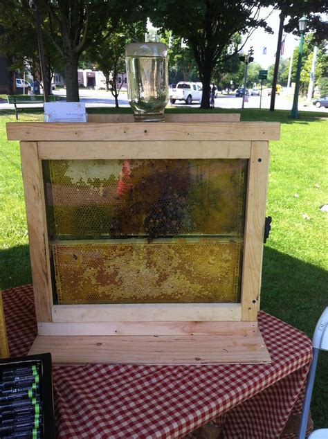 observation hive woodworking plans 28 creative observation hive woodworking plans egorlin
