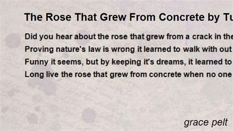 the rose that grew from concrete by tupac poem by grace