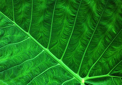 pattern nature photography nature s pattern photography 35 outstanding photos noupe