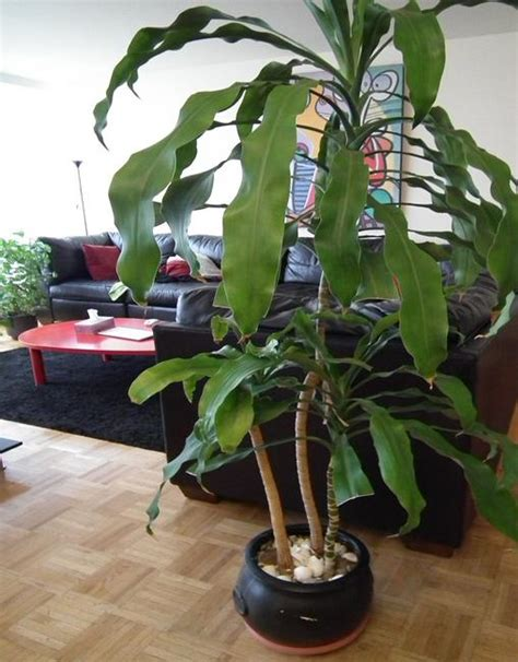 fresh beautiful indoor plant ideas for eco friendly 23201 green home decor that cleans the air top eco friendly