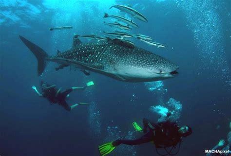 redang dive pulau redang pakej scuba diving