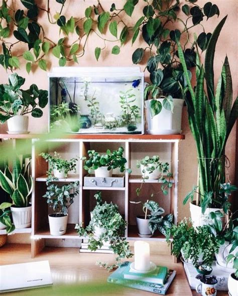 beautiful indoor patterned plants  create  lively