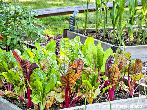 How To Have A Long Producing Vegetable Garden What Vegetable Gardening Supplies