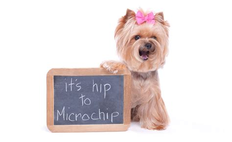 puppy microchip image gallery pet microchip