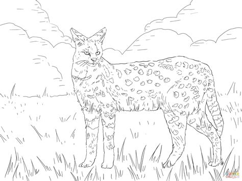 coloring pages of wild cats serval african wild cat coloring page free printable