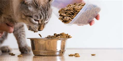 how often should i feed my how much to feed a cat and how often should you feed your cat
