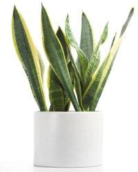 houseplants that don t need sunlight indoor plants that don t need sunlight