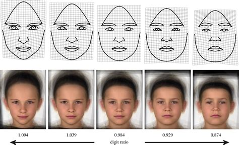 changing faces the consequences of exposure to gene and thyroid disrupting toxins books how do testosterone other androgens and their ratios
