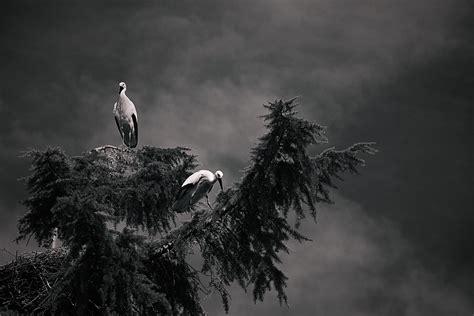 imagenes oscuras y tenebrosas aves tenebrosas