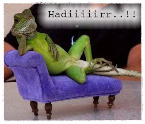 gambar kadal lucu dunia binatang