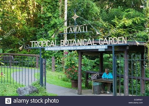 Hilo Botanical Garden Hilo Hawaii Big Island Hawaii Tropical Botanical Garden Green Stock Photo Royalty Free Image