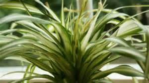Beliebte Zimmerpflanzen Bilder by Beliebte Pflegeleichte Zimmerpflanzen Frag Mutti