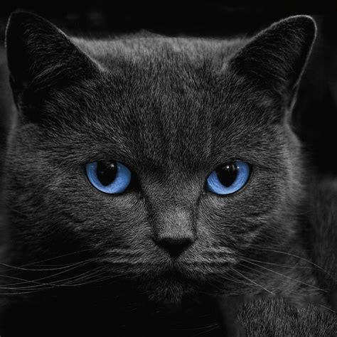 Kertas Kado Black Cat Kertas Kado Hitam Kucing gratis kucing hitam gambar animasi gratis kucing hitam gambar animasi android