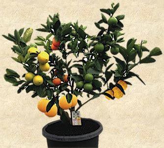 fruit cocktail tree the 25 best fruit salad tree ideas on healthy