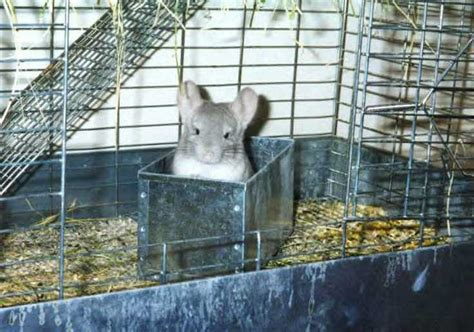 chinchilla house home cage