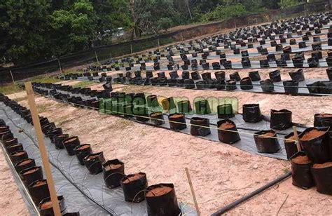 Perlengkapan Fertigasi Hidroponik 10 tahap mudah cara menanam cabai hidroponik fertigasi