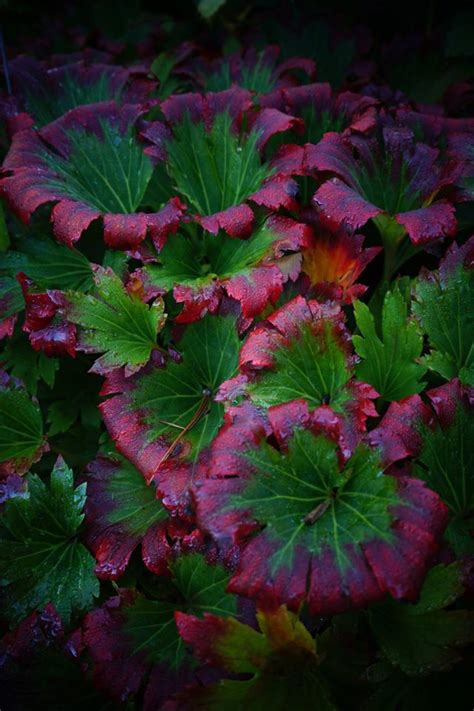best plants for shade with lights 996 best images about shade garden plants on shade garden hydrangeas and japanese