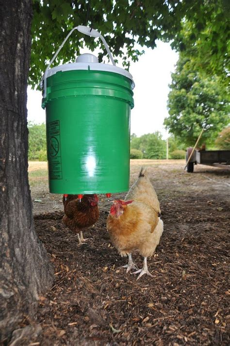 water feeder chicken feeders diy chicken waterer backyard
