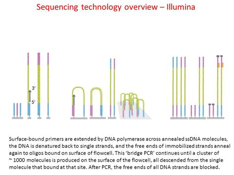 illumina sequencing technology bit 815 analysis of sequencing data ppt