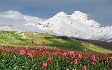 Flower Mountain fleurs de montagne field landscape hd papier peint de