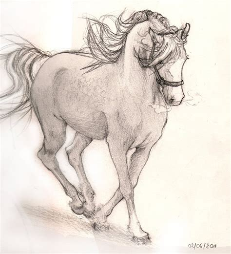 Sketches Horses by Sketch By Su Kichuya On Deviantart