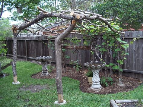 backyard grape vine backyard grape vine trellis sgwebg com