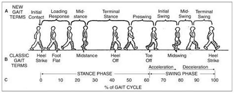 normative pattern definition gait physiopedia