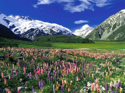 flower wallpaper nz クック山 3 754m ニュージーランド 壁紙 03532