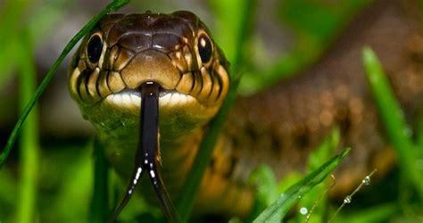 imagenes animales que se mueven c 243 mo se mueven las serpientes