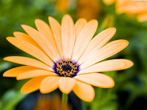 fiore immagine sfondi desktop fiore giallo