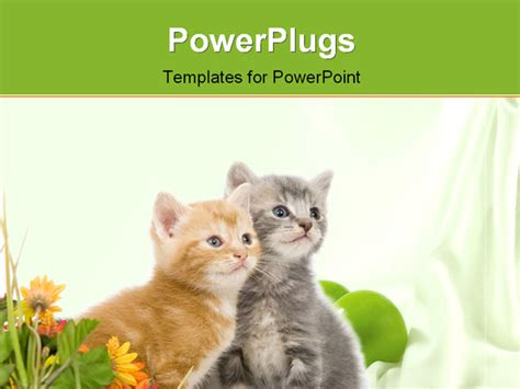 A Gray And Yellow Kitten Sit Next To Colorful Flowers On A White Background Powerpoint Template Cat Powerpoint Template