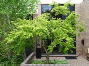 trees modern landscape