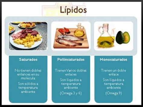 proteinas y lipidos lipidos y proteinas