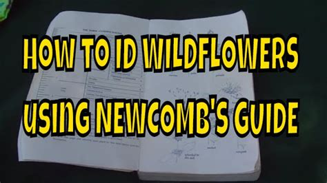 Pdf Newcombs Wildflower Guide Newcomb by How To Id Wildflowers Using Newcomb S Guide