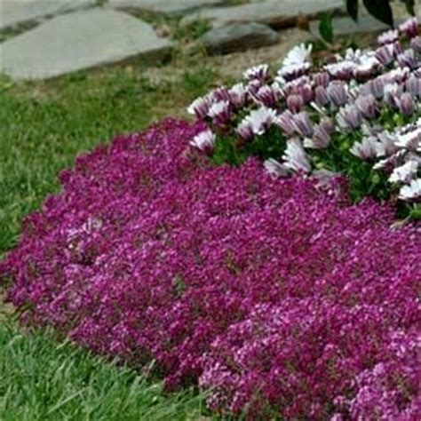 pin by kristin hacker on gardens flowers and landscaping
