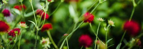 winterharte bepflanzung hardy plants society samlesbury