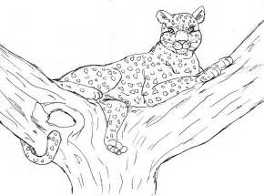 leopard color leopard coloring