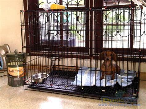 Jual Kandang Pagar Murah Meriah dunia anjing jual anjing dachshund jual mini tekel