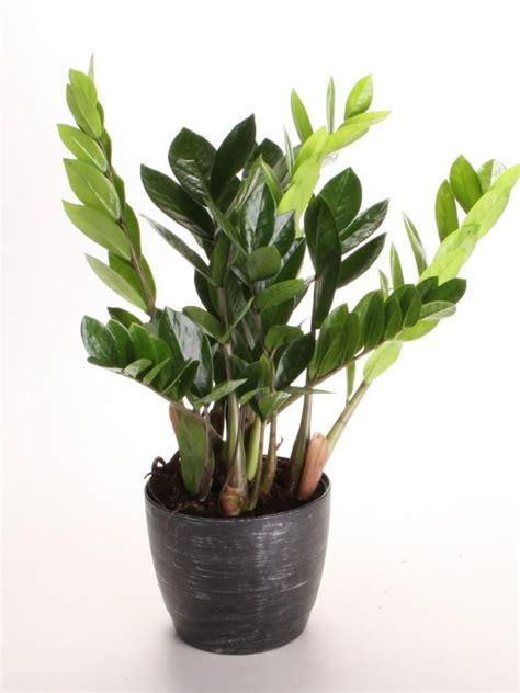very low light houseplants indoor plants low light hgtv