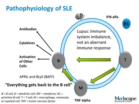 diagram sle pics for gt systemic lupus erythematosus diagram