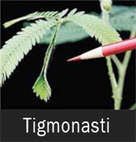 macam gerak  tumbuhan contoh gambar terlengkap