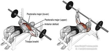 bench press worked decline barbell bench press a compound push exercise